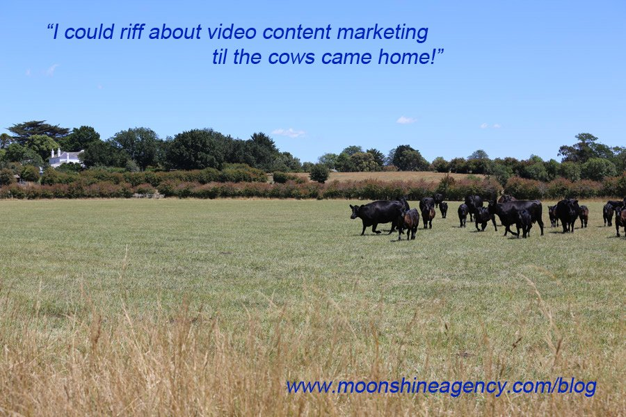 Moonshine Agency Blog Sue Collins Video Content Marketing Cows