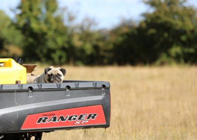 Pug-on-a-trailer-Moonshine-Agency_Stock-Image-Library