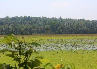 Lake Kerala India