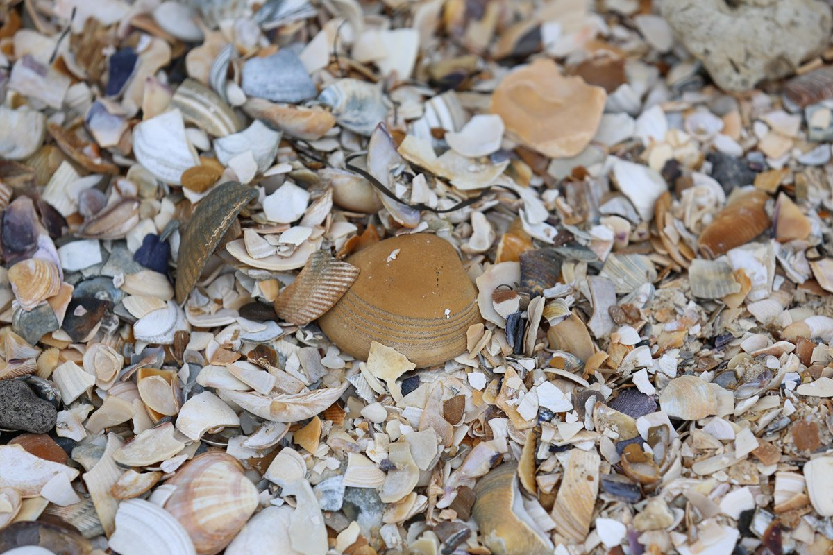 Shells on the beach at Port Melbourne_Moonshine-Agency_Stock-Image-Library